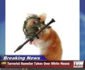 terrorist hamster